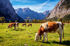 Karwendel mountains Royalty Free Stock Images