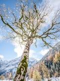 Karwendel Stock Photos