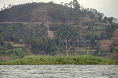 Kary wyspa na Jeziornym Bunyonyi Zdjęcia Royalty Free
