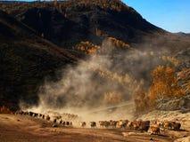 Kasachische Nomaden leben Schafe und Vieh in Herden lizenzfreie stockfotos