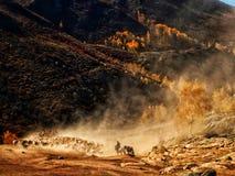 Kasachische Nomaden leben Schafe und Vieh in Herden stockfotos