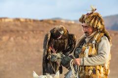 Kasachischer Eagle Hunter Berkutchi mit Pferd bei der Jagd zu den Hasen mit von Steinadlern auf seinen Armen Stockfotos