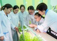 2019-09-01 Kasakhstan, Kostanay hydroponics Asiatiska studenter och lärare i ett vitt lag på en botanikkurs i en skolalabb arkivbilder