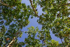 Kasawa od chmary mrówki Zdjęcie Stock