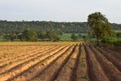 Kasawy gospodarstwo rolne Obrazy Royalty Free