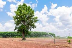 Kasawy uprawiać ziemię Fotografia Stock