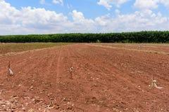 Kasawy uprawiać ziemię Zdjęcie Stock