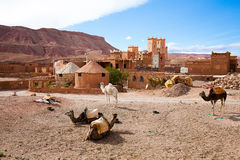 Kasbah in Morocco. Camels in front of Kasbah Ellouze in the Atlas foothills near Ait Ben Haddou, Morocco Royalty Free Stock Photo