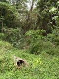 Kasetonuje miód w tradycyjnym sposobie w Africa obrazy stock