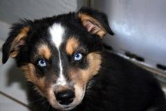 Kasey Blue-Auges stockbild
