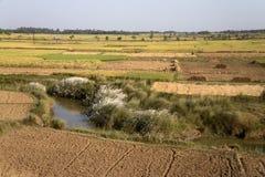 Kash Phool、绿色领域和路 库存图片
