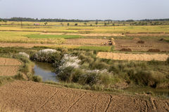 Kash Phool, зеленое поле и дорога стоковые изображения