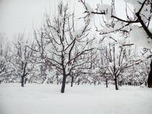 Kashmir coberto de neve Fotos de Stock Royalty Free