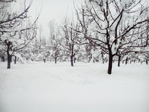 Kashmir coberto de neve Imagem de Stock Royalty Free