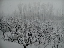 Kashmir coberto de neve Imagens de Stock Royalty Free