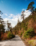 Kashmir Indien Royaltyfria Foton
