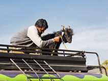 Kashmir Infrastructure man Goat on roof rack Stock Photos