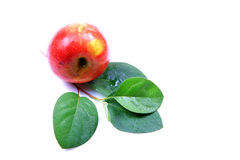 Kashmiri apple Royalty Free Stock Image