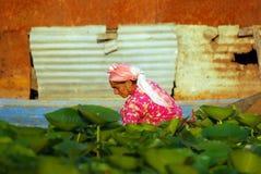 Kashmirian kvinna, Srinagar, Kashmir, Indien Royaltyfri Bild