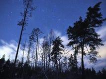Kasjopu gwiazdozbiór gra główna rolę na nocnym niebie i chmurnieje nad zima lasem obraz royalty free