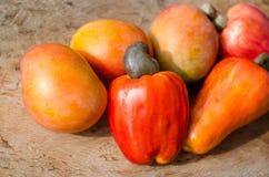 Kasjuäpplen och mango arkivfoto