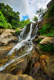 Kaskad i djungeln Royaltyfri Bild
