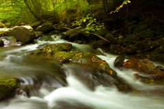 Kaskad i djup skog Royaltyfri Fotografi