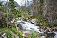 Kaskad i höga Tatras, Slovakien Arkivbilder