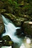 Kaskad med mossy rocks i skog Royaltyfria Bilder