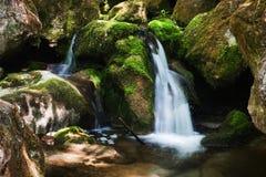 Kaskad med mossy rocks i skog Royaltyfri Bild