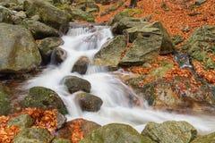 Kaskade auf dem Fluss in Böhmen Stockbild