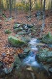 Kaskade in einem Wald Stockfotos