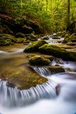 Kaskaden auf einem Strom in einem üppigen Wald in Holtwood, Pennsylvania lizenzfreies stockfoto
