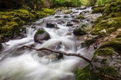 Kaskadennebenfluß in Tollymore-Park lizenzfreies stockfoto
