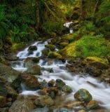 Kaskadenwasserfälle, Washington State Stockfotografie