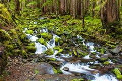 Kaskadenwasserfall im Regenwald Lizenzfreies Stockbild