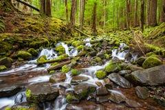 Kaskadenwasserfall im Wald Stockfotos