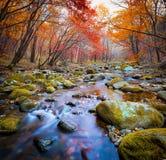 Kaskadflod i en skog arkivfoto