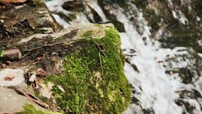 Kaskadnedgångar i skog lager videofilmer