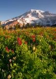 KaskadområdeRainier National Park Mountain Paradise äng Royaltyfria Foton