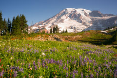 KaskadområdeRainier National Park Mountain Paradise äng Arkivbild