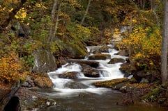 kaskadowy las zdjęcie royalty free