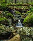Kaskady na małej zatoczce w lesie Zdjęcie Royalty Free