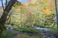 Kaskady tajemniczy Oirase Leją się spływanie przez pięknych jesień lasów Fotografia Stock