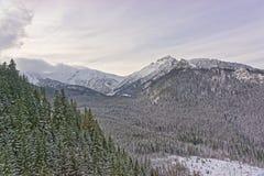 Kasprowy的扎科帕内Wierch森林在Tatra在冬天登上 库存照片