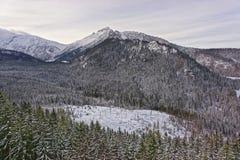 Kasprowy的Wierch森林在扎科帕内在Tatra在冬天登上 库存照片