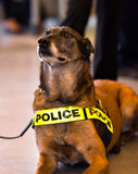 Kassaskåp för vakt för polishund den offentliga freden royaltyfri foto