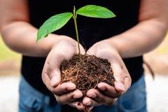 Kassaskåpet jordbegreppet, kvinna räcker den bärande plantan och en jord Royaltyfria Foton
