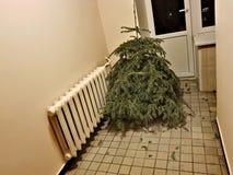 Kasserad julgran efter ferien arkivfoton