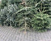 Kasserade julträd travde på trottoar för avfallsamling Royaltyfri Foto